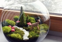 TerRaRiums / by Kate & Annie: handmade gifts boutique