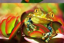 Frog Love / Frogs, frogs, and more frogs. Love 'em! And of course his best friend Toad here and there. / by Stephanie Enke