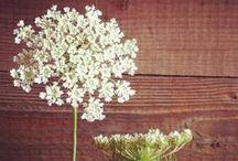 //Flowers// / by Lindsey McClellan