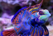 Sea Life / by Dale Bernard
