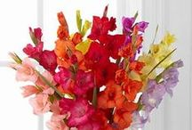 Summer / by FTD Flowers