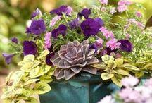 //Gardening & House Plants// / by Lindsey McClellan