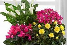 Gardening / by FTD Flowers