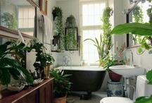Dream Bathroom  / by Dara Muscat