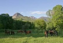 Ranch Life / by Heather Hege