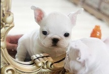 Cute Overload / by Brooke Captain