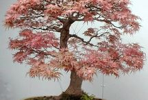 Horticulture: Bonsai / by Debbie Cooley