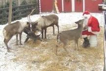 Holidays - Christmas / by Phillis Benson