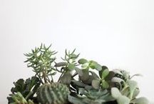 TERRARIUM PARTY / Notes on throwing a terrarium party | decor, activities, food, and drink