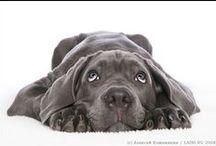 Pets / by Aco Alvarez