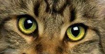 Non solo Gatti