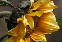 Yellow Hues / Wonderful things in yellow. / by Debby Moore