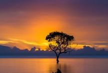 Trees of Life / by Lucy Dinner