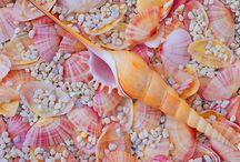 shell and echinodermi