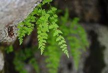 Mystic Woods / by Debby Moore