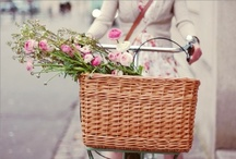 :: bicycle :: / Fellow pinners ; please feel free to repin as much as you wish / by Avery Joy Paris