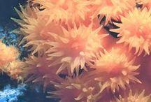 Fotografie subacque personali / Macro Fotografie subacque scattate con nikonos e tubi di prolunga