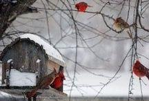 Inverno winter / Aspetti dell'inverno
