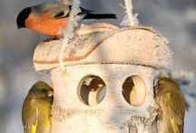 Bird house / Casette per uccellini