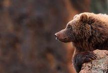 BEARS / by Debby Moore