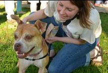 Dog Mom / I am a proud Dog Mom to Trixie the Wonder Dog, a boxer-Boston terrier mix from CompAnimals Pet Rescue in Landenberg, PA: http://companimals.org/. I am a strong advocate for pet adoption and animal welfare! #adoptdontshop