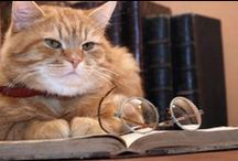 Cats and Books / Some things just go together
