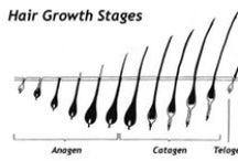 Hair Growth Phases