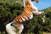 Exotic animals for when I' older / Exotic animals
