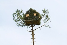 Tree Houses and Trees