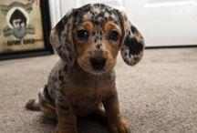 a bit cute