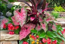 My secret Garden / by Melinda Elliott