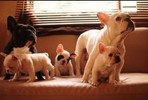 adorable animals / by Briana McDonald
