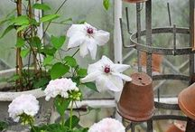 Conservatory / by Denise Miller