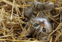 Kitty Kats! / by Leslie Cargile