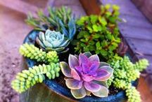 flowers + plants + succulents / by Briana McDonald