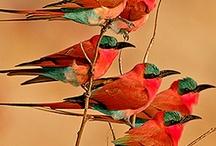 Birds / by Carol McNaughton