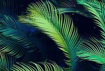 TROPICOOL / by Eve St.Jude
