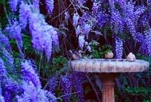 Garden / by Julie Hoffman