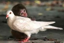 All Creatures Great And Small <3