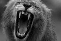 Pride / Kings and Queens of Africa / by Skyler Tilley