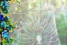Theme-Spider and Web