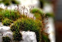 Just Moss / Mossy moss mossness and maybe some lichen too! Follow me on INSTAGRAM: @DBTerrariums
