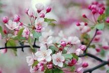 Flowers: Growing on Trees / Beautiful tree blossoms
