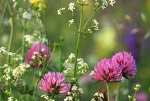 Flowers: Growing Wild / I am a wildflower