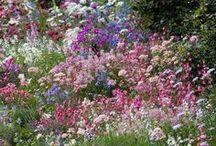 Flowers: Growing in Gardens & Fields / Pieces of Eden