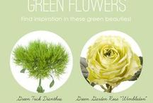 Flowers: Names & Meanings
