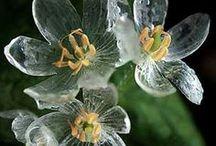 Flowers: Unique / Unique, rare, even common but still Wow