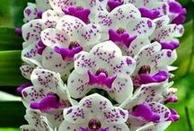 Orchids / Mind-blowing orchids