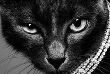 I Love Cats / by Lisa Marie