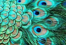 Feathers, Feathers, Feathers! / Feathers that inspire the creative minds at Team Rainbow Designs. Find us on Facebook, facebook.com/teamrainbowdesigns. Visit our store, teamrainbowdesigns.com! / by Team Rainbow Designs